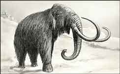 Old drawing of a Wooly Mammoth