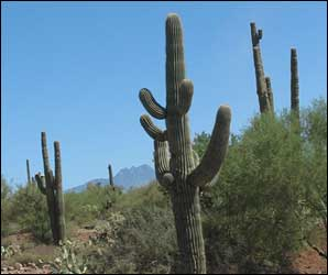 Tall Cactus Types Of